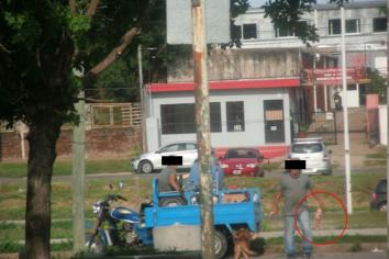 Motocarro arroja carne podrida en contenedores
