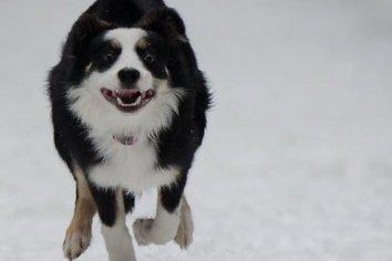 Perro rescató a cachorrito de ser atropellado