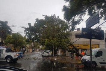 Por los fuertes vientos cayó un árbol en la vía publica