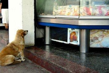 Un perro le pidió comida a un carnicero, él agarró un cuchillo y lo mató