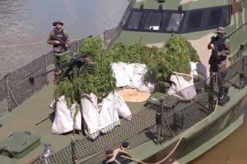 Encontraron una gran plantación de marihuana en un predio el ejercito