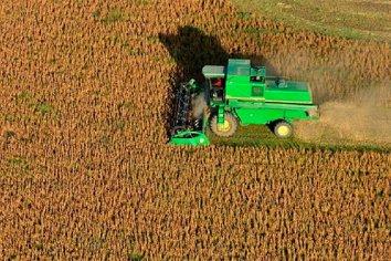 En Argentina se perdería hasta US$3000 millones por el derrumbe del precio de la soja