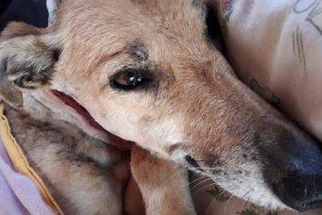 Conmoción por otra perra despellejada