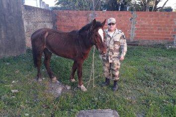Recuperaron dos caballos que habían sido robados