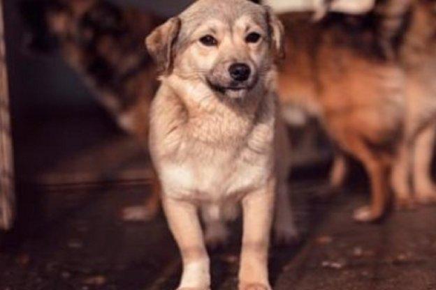 Donaron alimento envenenado a varios refugios y mataron a más de 20 perros