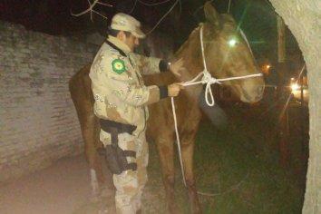 Recuperaron una yegua que habia sido robada