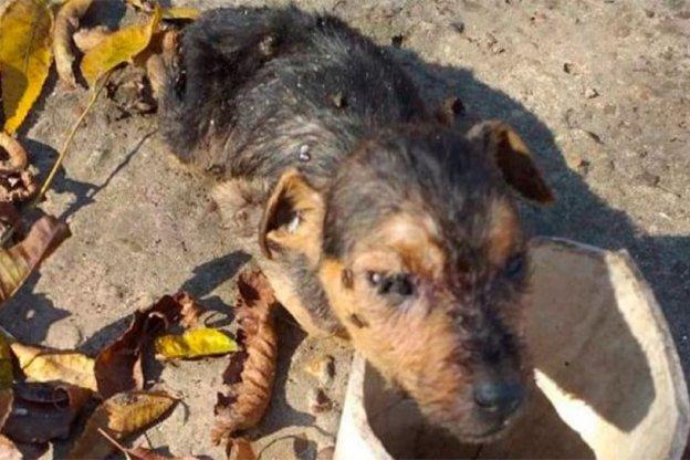 Allanaron una vivienda por un brutal caso de maltrato animal