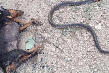 Perro héroe murió picado por cobra para salvar a sus dueños