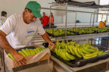Aumentó el precio de la banana por falta de abastecimiento