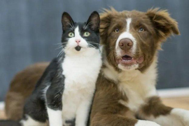 Mantener un gato y un perro sale más de $7.000