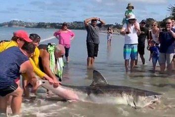 Encontraron un tiburón la costa, lo golpearon y luego se sacaron fotos