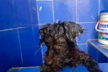 Cruel: abandonaron una perra y le pegaron los ojos para que no pudiera seguirlos