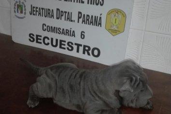 Recuperaron un perro que había sido sustraído
