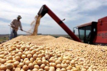 La soja se derrumbó 9,3% y perforó los u$s500 en Chicago