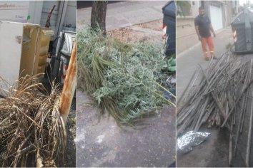 El municipio solicita a los vecinos de Paraná no sacar ramas y ser más solidarios