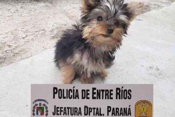 Policía logró recuperar un perrito que había sido robado