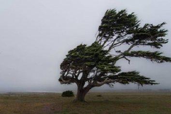 Rige un alerta amarilla por fuertes vientos en Entre Ríos