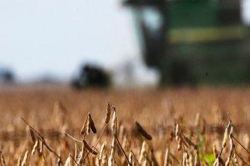 Anunciarán una rebaja temporal de retenciones a la soja y a la carne para incentivar la liquidación de dólares