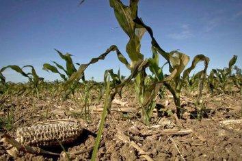 Piden la emergencia agropecuaria en tres departamentos