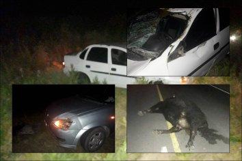 Dos autos chocaron una vaca que caminaba por la ruta