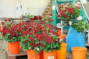 Por primera vez no se ven vendedores ambulantes de flores