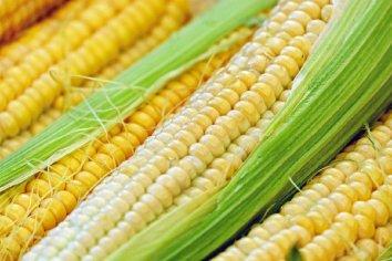 Comenzarán a limitar las exportaciones de maíz