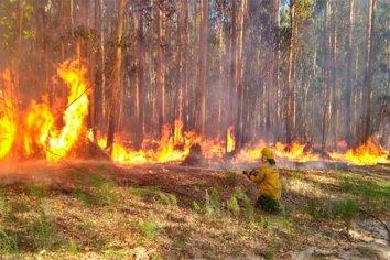 Se incendiaron 25 hectáreas de un monte de eucaliptos