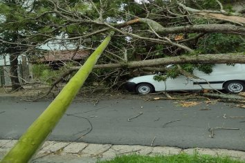 Cayó un árbol de grande dimensiones en calle 25 de Mayo y el tránsito estuvo interrumpido