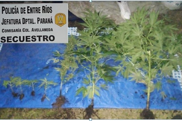 Allanaron una casa en busca de elementos robados y hallaron plantas de marihuana