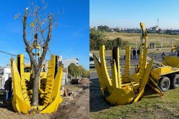 Comenzó el traslado de los árboles de Bv Racedo a Plaza de las Mujeres Entrerrianas