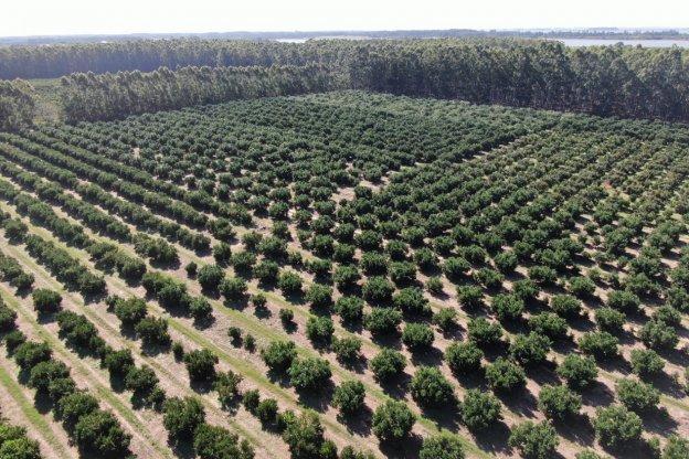 Bordet valoró la extensión y ampliación de beneficios para la producción citrícola